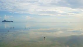 La gente che riunisce le conchiglie all'acqua bassa con superficie riflettente Siluetta dell'uomo Cowering di affari video d archivio