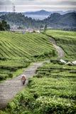 La gente come agricoltore che cammina in strada del winiong, Immagine Stock Libera da Diritti