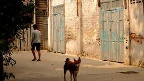 La gente con i cani cammina nella comunità anziana del muro di mattoni fotografie stock
