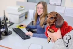 La gente con i loro animali domestici sta aspettando un esame medico alla clinica veterinaria Salute degli animali fotografia stock libera da diritti