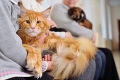 La gente con i loro animali domestici sta aspettando un esame medico alla clinica veterinaria Salute degli animali immagini stock libere da diritti