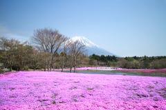 La gente de Tokio y de otras ciudades viene al Mt Fuji y goza de la flor de cerezo en la primavera cada año Imágenes de archivo libres de regalías
