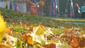 La gente del patio relaja el parque del otoño, árboles forestales Hojas caidas almacen de metraje de vídeo