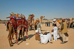 La gente del pueblo tiene resto con los camellos Foto de archivo