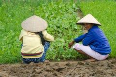 La gente del Vietnam, agricoltore vietnamita, viaggio Immagini Stock