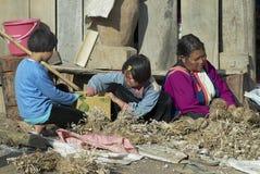 La gente dell'aglio di specie del gruppo etnico di Lisu in Chiang Mai, Tailandia Immagini Stock