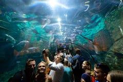 La gente dentro l'acquario del tunnel dello squalo del parco Loro P di Loro fotografie stock