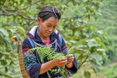 La gente di PA del Sa nel Vietnam Immagini Stock Libere da Diritti