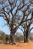 La gente di San in Namibia fotografia stock libera da diritti