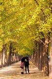 La gente disfruta del otoño de oro en Pekín Imágenes de archivo libres de regalías