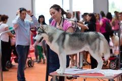 La gente ed i cani stanno preparando per la mostra Fotografia Stock