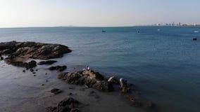 La gente en piedras en la costa recoge los mejillones, cáscaras, mariscos Visión superior almacen de video