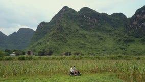 La gente en la vespa oculta en campo de maíz cerca de la antena de la carretera metrajes