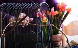 La gente fa il ikebana il 18 marzo 2017 a Sofia, Bulgaria Immagine Stock