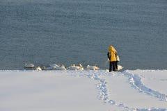 La gente fa il percorso attraverso la neve per alimentare i cigni sul fiume fotografia stock