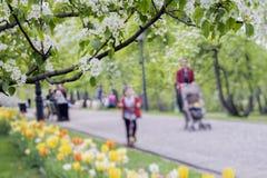 La gente feliz que camina, familias con los niños en parque con los tulipanes, flores de Sakura, cereza, manzana florece, día sol imagen de archivo