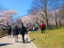 La gente gode dei fiori di ciliegia della molla al ` s, alto parco di Toronto Fotografie Stock
