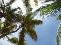 La gente gode del monarca della nave da crociera che viaggia Aruba, il Bonaire, nel curacao, nel Panama e Cartagine fotografia stock