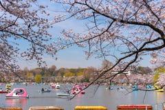 La gente goza de las flores de cerezo en Japón foto de archivo libre de regalías