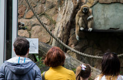 La gente guarda le scimmie nello zoo di Leningrado Fotografia Stock