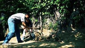 La gente ha tagliato un ramo in una foresta con un'ascia stock footage
