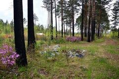 La gente lanzó desperdicios en el bosque otras casas de la estructura de la gente para ellos mismos Fotos de archivo