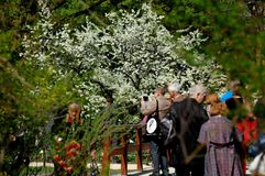 La gente mira las flores florecientes en el parque Imágenes de archivo libres de regalías