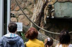 La gente mira los monos en el parque zoológico de Leningrad Foto de archivo