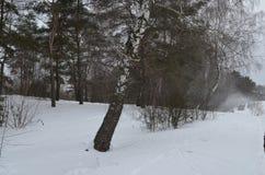 La gente monta en los trineos cerca del bosque del invierno Imagenes de archivo