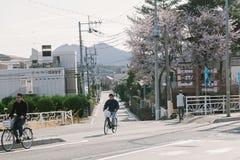 La gente monta una bicicleta en el camino con Cherry Blossom fotografía de archivo