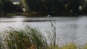La gente navega el mañana de la tranquilidad del bote pequeño en el lago metrajes