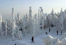 La gente nella foresta di inverno Fotografia Stock