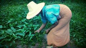 La gente nello stile di vita rurale Fotografia Stock Libera da Diritti