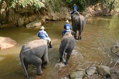 La gente no identificada baña elefantes en el río de Mae Sa Noi en Mae S Imagen de archivo libre de regalías