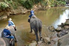 La gente no identificada baña elefantes en el río de Mae Sa Noi en Mae S Fotos de archivo