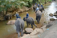 La gente no identificada baña elefantes en el río de Mae Sa Noi en Mae S Imagen de archivo