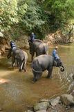 La gente no identificada baña elefantes en el río de Mae Sa Noi en Mae S Fotografía de archivo