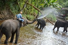 La gente no identificada baña elefantes en el río de Mae Sa Noi en Mae S Foto de archivo libre de regalías