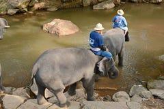 La gente no identificada baña elefantes en el río de Mae Sa Noi en Mae S Foto de archivo