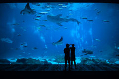 La gente osservando pesce all'acquario 1 Immagine Stock Libera da Diritti