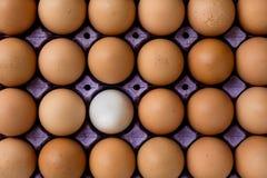 La gente preferisce le uova colorate invece di bianco Fotografia Stock Libera da Diritti