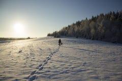 La gente profila nel campo di nevicata vicino ad abete Forest Sun Winter Immagine Stock Libera da Diritti