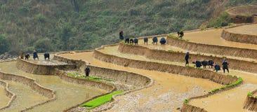 La gente que trabaja en el arroz coloca en Yen Bai, Vietnam Fotografía de archivo libre de regalías