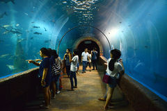 La gente que ve Fishs está nadando en un acuario imagen de archivo libre de regalías