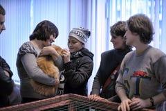 La gente que vino a la mano de la exposición elegir un animal doméstico Imágenes de archivo libres de regalías