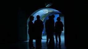 La gente se coloca en el oceanarium más grande de Moskvarium en Rusia metrajes