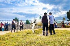 La gente si è vestita in vecchi vestiti di ethno a riso manuale che raccoglie la manifestazione facendo uso del cavallo Fotografia Stock Libera da Diritti