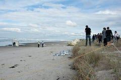 La gente si raccoglie sulla spiaggia per osservare il guaime di Rena d Immagine Stock Libera da Diritti