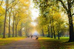 La gente sotto un viale degli alberi in autunno Fotografie Stock Libere da Diritti