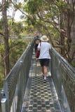 La gente sta camminando la passeggiata della cima dell'albero nella valle del Giants, Australia Fotografia Stock